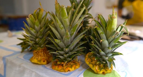 Eco-friendly plates made from pineapple will sprout when planted