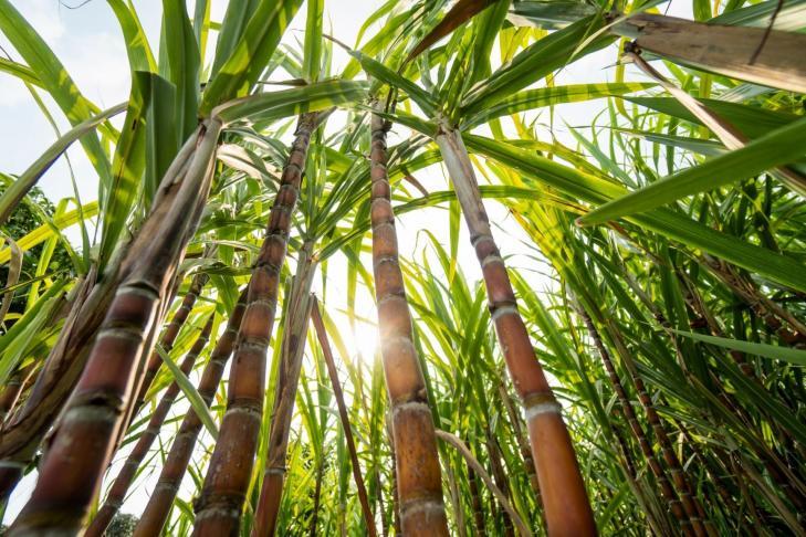 NatureWorks planning PLA plant in Thailand