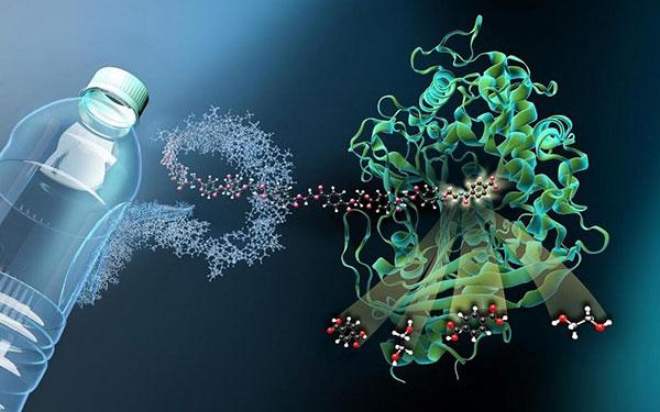 Tuỳ vào môi trường sinh trưởng mà vi khuẩn được chia ra làm hai loại là: vi khuẩn yếm khí và vi khuẩn hiếu khí