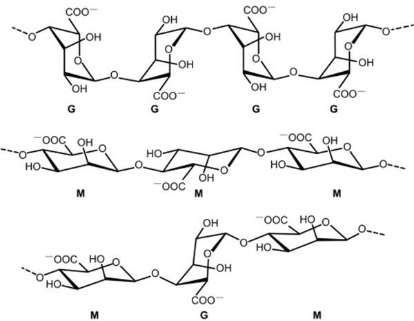 Cấu tạo hoá học của Alginate