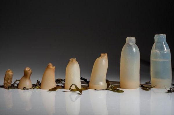 Chai nước được làm từ Agar đang phân hủy