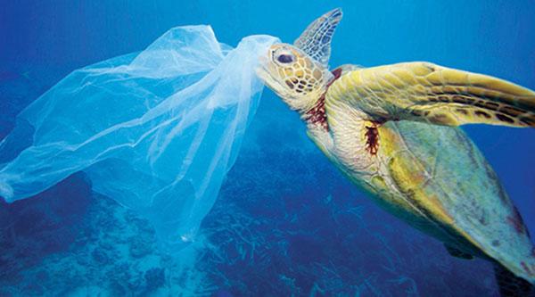 Túi ni lông cũng là tác nhân gây ra các chết cho sinh vật biển