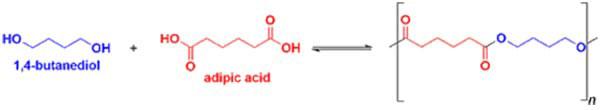 Axit adipic và 1,4-butanediol được kết hợp để tạo ra polyeste thứ nhất