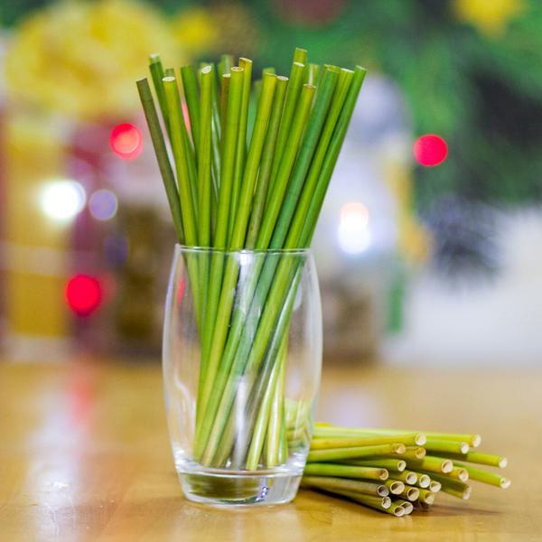 Nhiều người không dùng ống hút nhựa và chuyển sang dùng ống hút cỏ