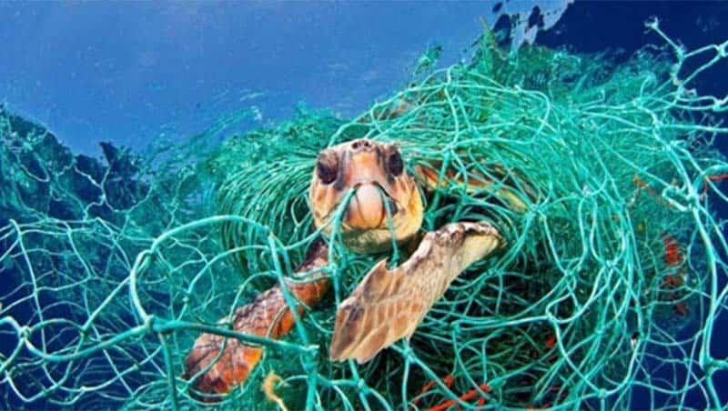 Lưới đánh cá bị vứt bỏ gây nguy hại cho các sinh vật biển