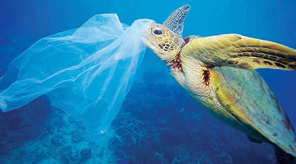túi ni lông gây hại động vật biển